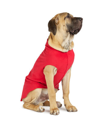 Gold Paw Stretch Fleece Red Dog Coat, 22